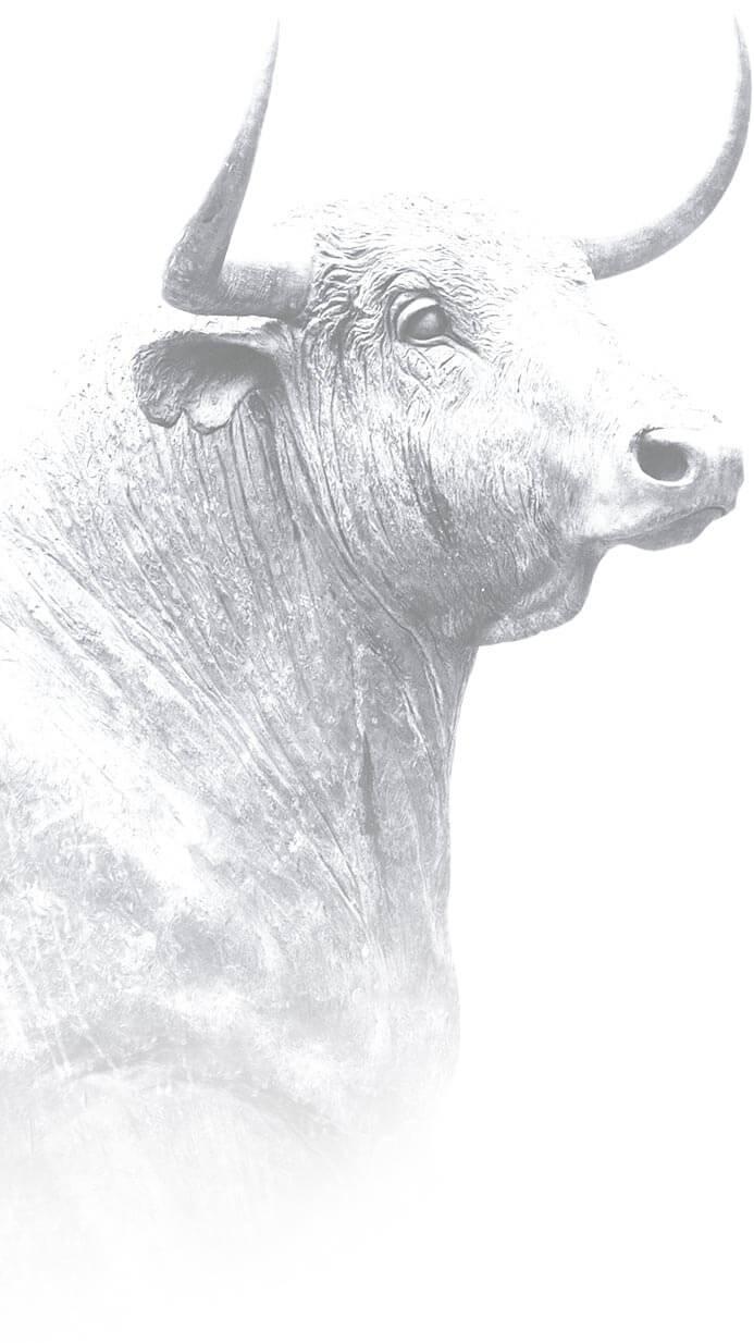 ecobeef-ourfarm-bull-bg